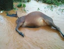 Mưa lũ nặng nề nhất trong khoảng 20 năm ở Nam Tây Nguyên gây thiệt hại hàng trăm tỷ đồng