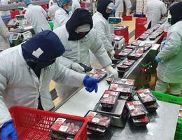 Thịt mát an toàn cho người tiêu dùng, sắp tới bỏ dần thịt nóng