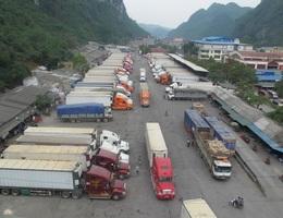 """Hàng trăm xe thanh long """"tắc đường"""" sang Trung Quốc vì virus corona"""