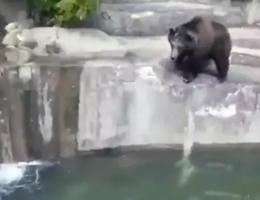 Say xỉn, trèo vào sở thú đánh nhau với... gấu
