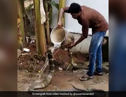 Thót tim xem người đàn ông tắm cho rắn hổ mang chúa