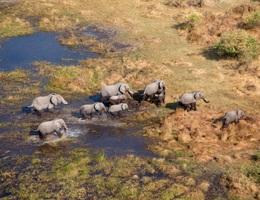 Hơn 150 con voi chết bí ẩn ở Nam Phi