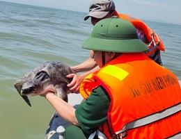Giải cứu rùa biển kiệt sức vì mắc lưới