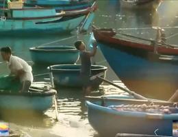 Độc đáo nghề lưới cá thu ở vịnh Vĩnh Hy
