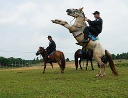 Cận cảnh kỵ binh CSCĐ thuần dưỡng ngựa nơi thao trường nắng gắt