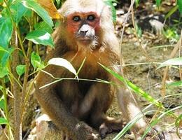 Trả tự do cho 4 cá thể động vật quý, hiếm về rừng