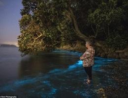 Kỳ thú ánh sáng mê hoặc của các sinh vật phù du trong nước