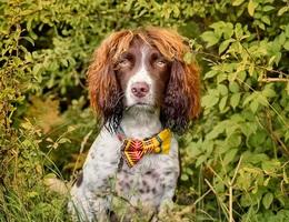Chú chó nổi đình đám nhờ ngoại hình giống ngôi sao nhạc rock