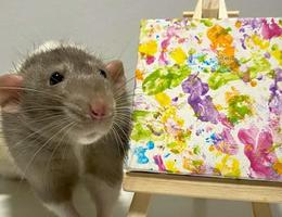 """Chuột """"triệu phú"""" vẽ tranh bán giá hàng chục triệu đồng"""