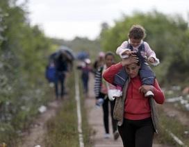 Anh và Pháp mở cửa đón người tị nạn