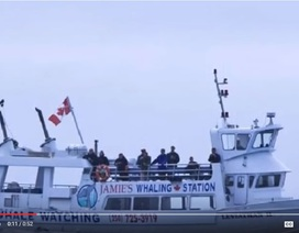 Thuyền du lịch chìm ngoài khơi Canada, ít nhất 4 người chết