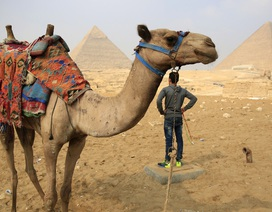 Nga có thể sớm nối lại các chuyến bay thẳng tới Ai Cập
