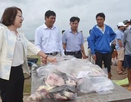 Giá cá bớp rớt thê thảm, người nuôi thua lỗ hàng trăm triệu đồng