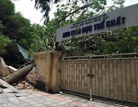 Hà Nội: Phòng chống thiên tai, đảm bảo cho năm học mới