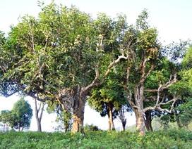 Trà truyền thống Việt Nam từng bước chinh phục thế giới