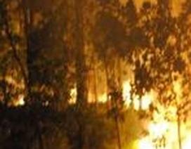 Hơn 2 ha rừng thông bị thiêu rụi