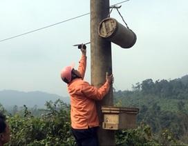 Đi săn ong rừng