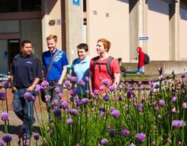 Hội thảo du học Mỹ: Cao đẳng Cộng đồng Lane