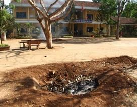 Ban giám hiệu tự ý cho chặt hạ cây lâu năm trong trường