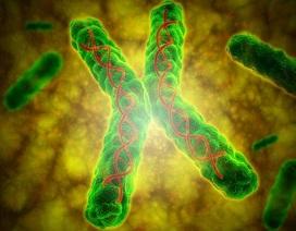 Gia cảnh nghèo làm tổn hại ADN của người