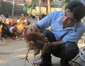 Cử nhân ngoại ngữ về quê chăn nuôi