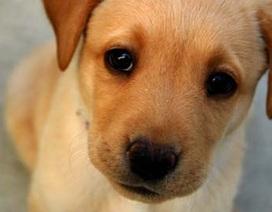 Não của chó và người giống nhau đến kinh ngạc