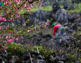 Cao nguyên đá Đồng Văn gia nhập Mạng lưới Công viên địa chất toàn cầu
