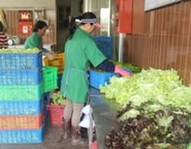 Mưa lớn kéo dài, giá rau củ Đà Lạt tăng chóng mặt
