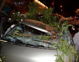 Cuồng phong quét qua TPHCM, cây đổ, tường sập, 3 người bị thương