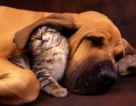 """Ai bảo """"ghét nhau như chó với mèo""""?"""