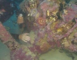 Tìm thấy xác máy bay dưới đáy biển sau 70 năm