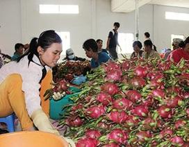 """Trái cây Thái """"mượn"""" Việt Nam tiến vào Trung Quốc"""
