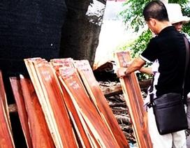 """Bán cả """"rừng non"""" cho Trung Quốc"""