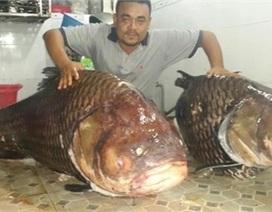 """Ngư dân Thái Bình bán hớ cá """"thần tài"""" 1,5 tỷ đồng"""