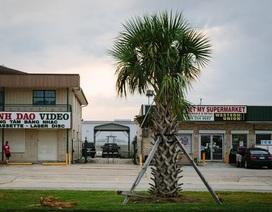 Hậu bão Katrina, người Việt tại Mỹ hồi phục mạnh mẽ