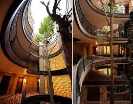 Giải pháp thông minh tránh chặt cây cổ thụ trong công trình xây dựng