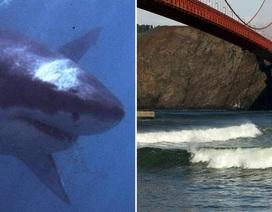 """Cá mập trắng quấy phá """"kình ngư"""""""