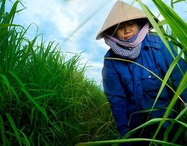 Doanh nghiệp mía đường với hội nhập: Lấy bền vững làm thước đo phát triển