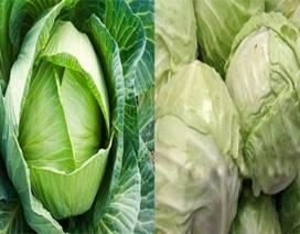 Nhận biết bắp cải và súp lơ Trung Quốc