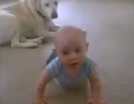 Chó cưng dạy em bé bò