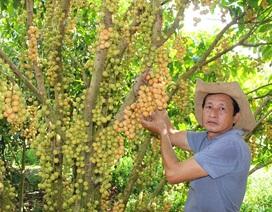 Nông dân trồng dâu làm du lịch vườn thu tiền tỷ