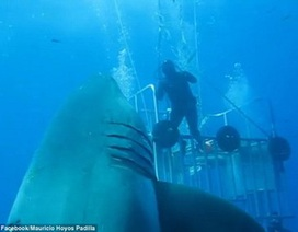 Rùng mình khoảnh khắc cá mập dài 6m tấn công thợ lặn