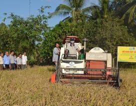Đạm Cà Mau - Đồng hành cùng nông dân Việt Nam