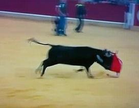 Chú bò nổi điên húc rách quần của khán giả quá khích