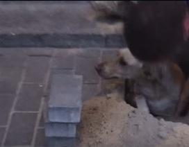 Màn giải cứu kịch tính chú chó bị chôn sống trong hai ngày