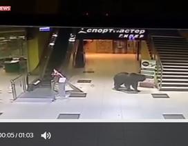 Nga: Gấu hoang dã gây náo loạn trung tâm mua sắm