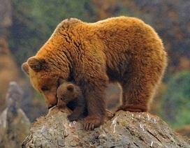 Dễ thương những hình ảnh mẹ con nhà gấu