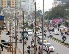 Vì sao Hà Nội trồng lát hoa thay gỗ mỡ trên đường Nguyễn Chí Thanh?