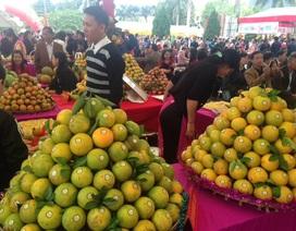 Hoà Bình: Lễ hội cam Cao Phong tiêu thụ 30 tấn cam trong ngày đầu tiên