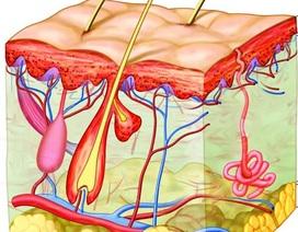Những bài thuốc trị rụng tóc từ hà thủ ô